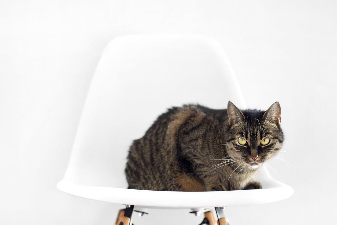 an indipendent cat