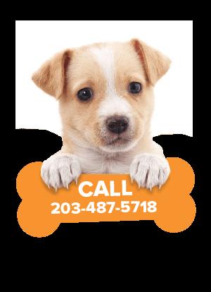 Dachshund Puppies for Sale in Connecticut - CT Breeder