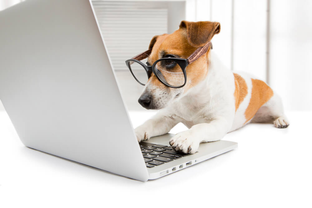 dog in glasses looking into PC