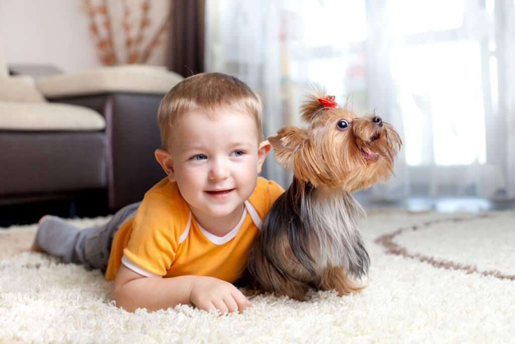 a boy with a teacup puppy
