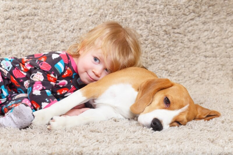 Child and Beagle