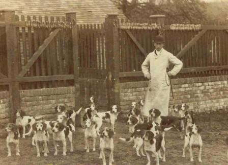 Caynsham Foot Beagle Pack (1885)