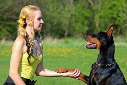 Doberman Pinscher is giving his paw to a woman